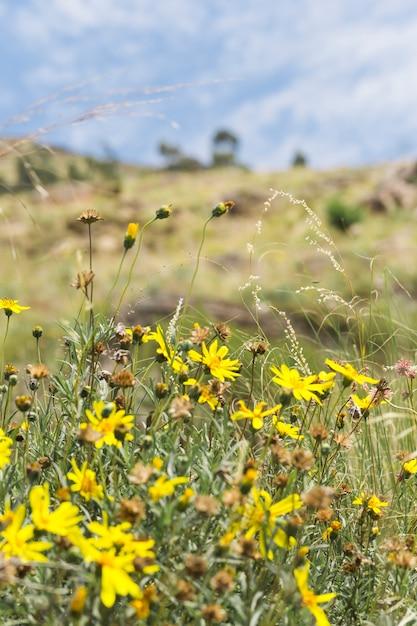 Flores amarelas no prado Foto gratuita