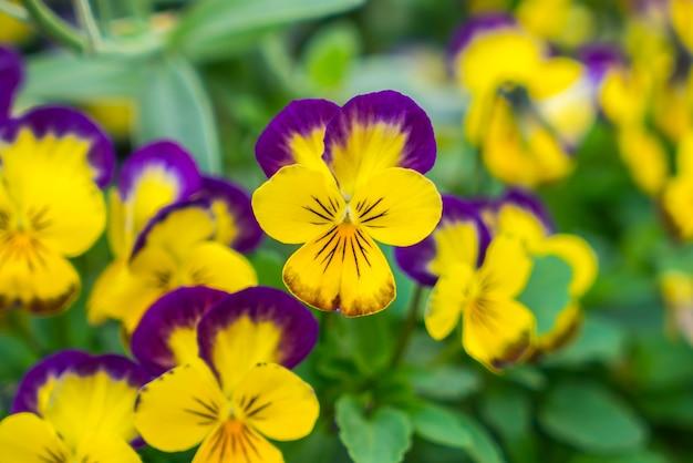 Flores Amarelas Pequenas Bonitas.