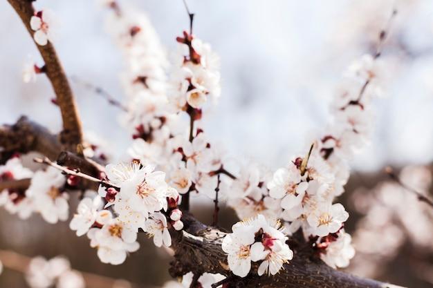Flores ao ar livre Foto gratuita