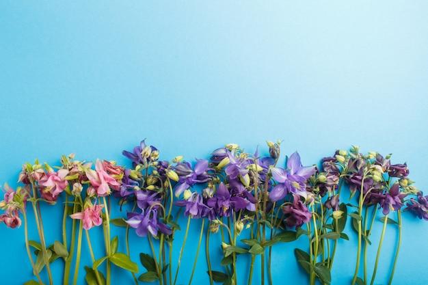 Flores aquilégias cor-de-rosa e roxas no azul pastel. Foto Premium