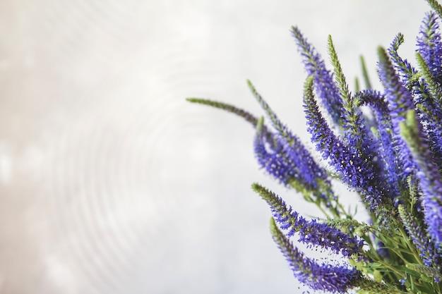 Flores azuis de veronica. Foto Premium
