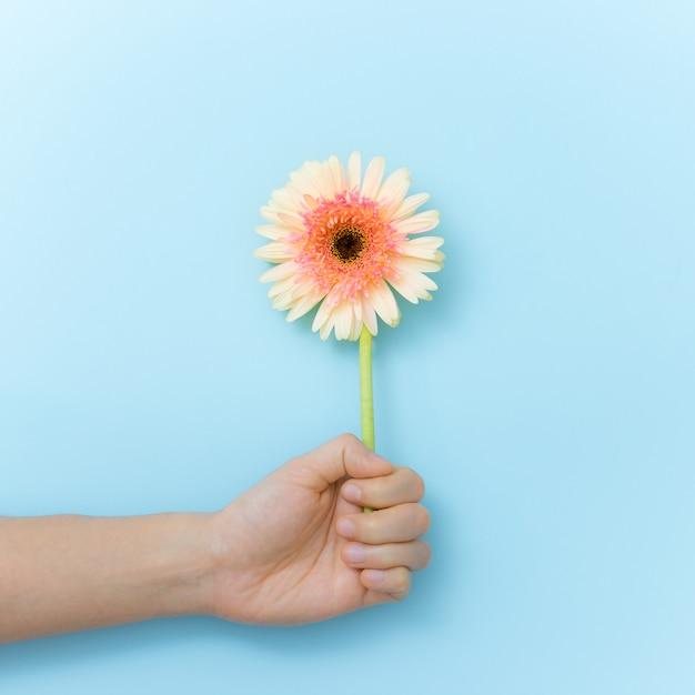 Flores bonitas ao presente à disposição sobre o fundo azul. tempo de primavera e inspiração Foto Premium