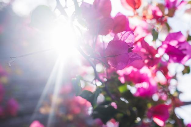 Baixar Imagens Bonitas: Flores Bonitas Com Fundo Do Sol