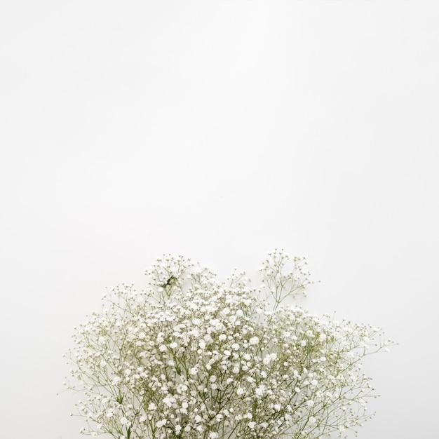 Flores brancas de respiração do bebê na superfície branca Foto gratuita