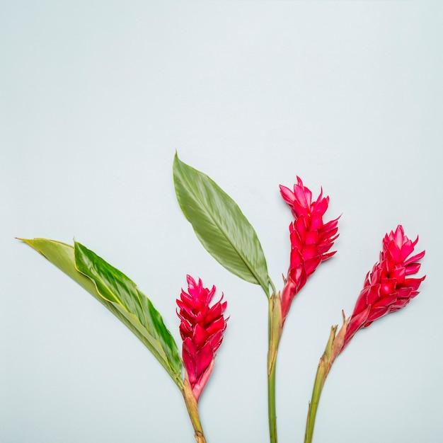 Flores cor de rosa brilhantes no fundo branco Foto gratuita