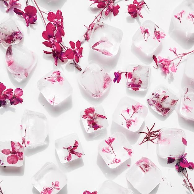 Flores cor de rosa em cubos de gelo Foto gratuita