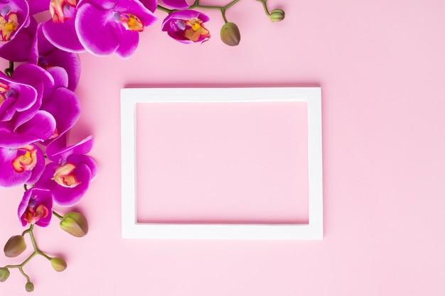 Flores da orquídea em um fundo de espaço de cópia rosa Foto gratuita