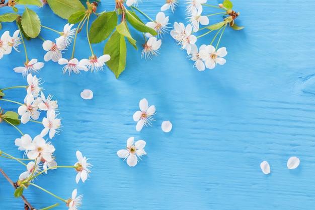 Flores da primavera branca sobre fundo azul de madeira Foto Premium