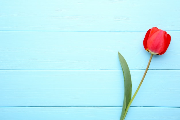 Flores da primavera. buquê de tulipas vermelhas em azul. Foto Premium