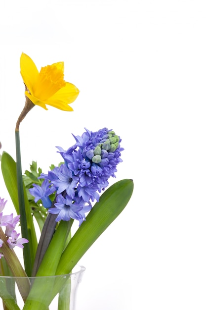 Flores da primavera - jacinto e narciso em branco Foto gratuita