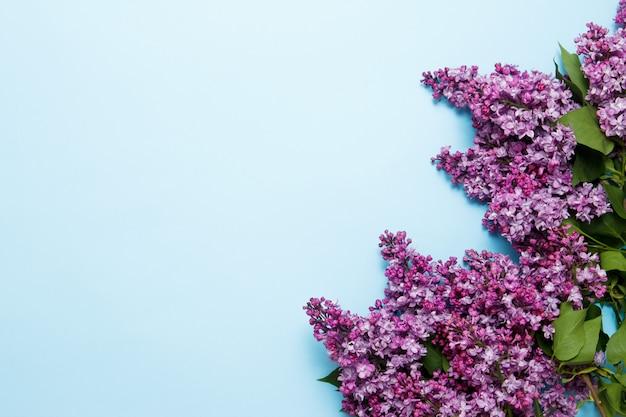 Flores da primavera lilás sobre fundo azul Foto Premium