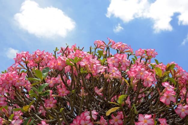 Flores de azálea Foto Premium