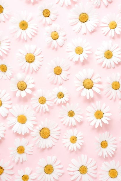 Flores de camomila em amarelo pastel Foto Premium