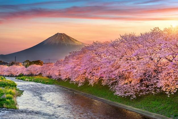 Flores de cerejeira e montanha fuji na primavera ao nascer do sol, shizuoka no japão. Foto gratuita