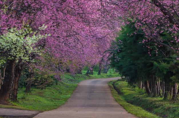 Flores de cerejeira em plena floração Foto Premium
