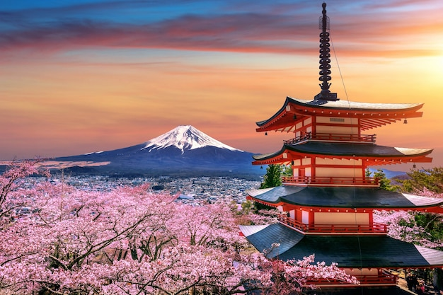 Flores de cerejeira na primavera, pagode chureito e montanha fuji ao pôr do sol no japão. Foto gratuita
