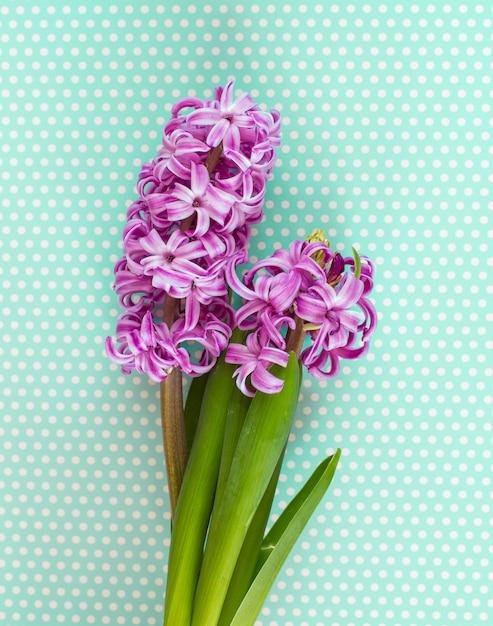 Flores de jacinto violeta Foto Premium
