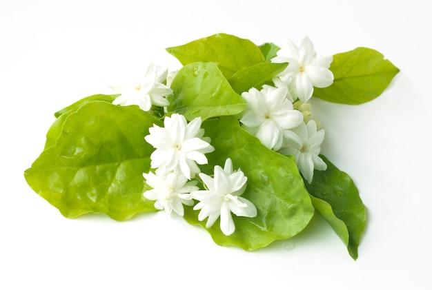 Flores de jasmim branco flores frescas naturais Foto Premium