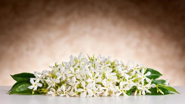 Flores de jasmim na mesa branca e fundo bege Foto Premium