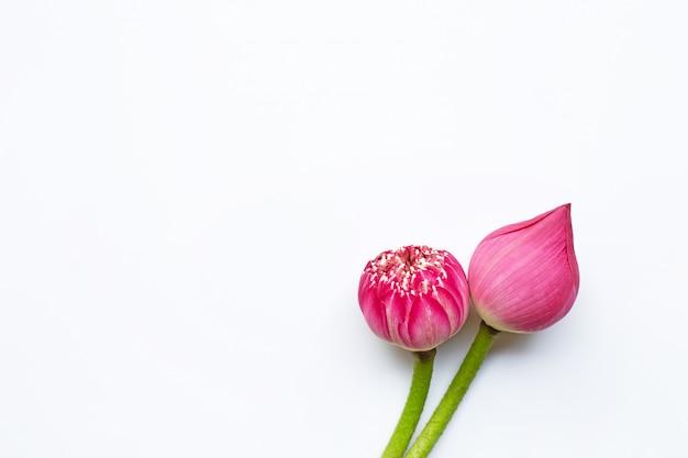 Flores de lótus rosa em branco Foto Premium