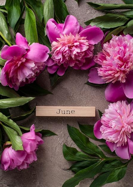 Flores de peônia rosa na superfície da luz Foto Premium