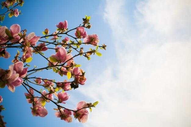 Flores de primavera Foto gratuita