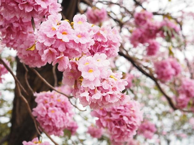 Flores de trombeta cor-de-rosa para a primavera ou o verão. Foto Premium