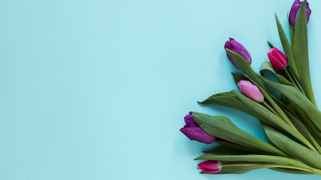 Flores de tulipa violeta gradiente e fundo azul Foto gratuita