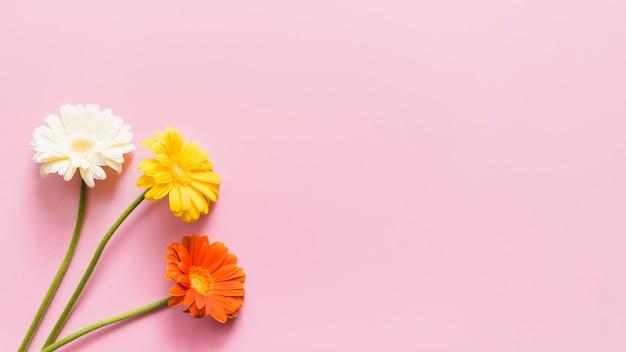 Flores decorativas coloridas daisy em um fundo Foto gratuita