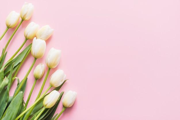 Flores decorativas de tulipa em um fundo colorido Foto gratuita