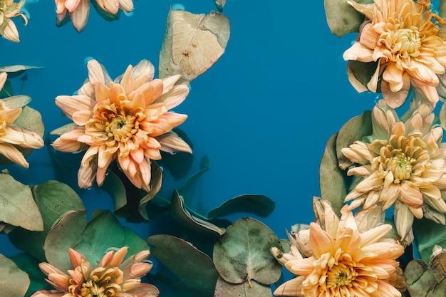 Flores delicadas com folhas na água Foto gratuita