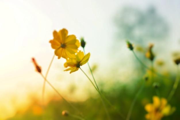 Flores desabrochando com luz de fundo natural Foto Premium