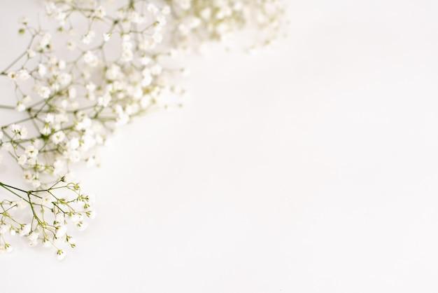 Flores do gypsophila no fundo branco. fundo delicado para cartões Foto Premium