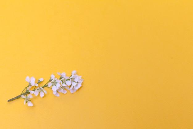 Flores e folhas de cerejeira sobre um fundo amarelo. Foto Premium