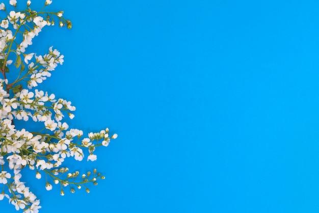 Flores e folhas de cerejeira sobre um fundo azul. Foto Premium
