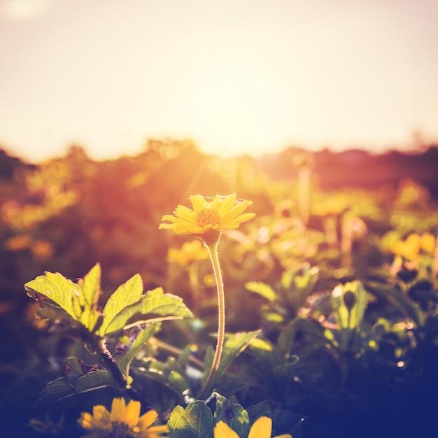 Flores e plantas no por do sol Foto Premium
