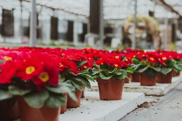 Flores em estufa Foto Premium