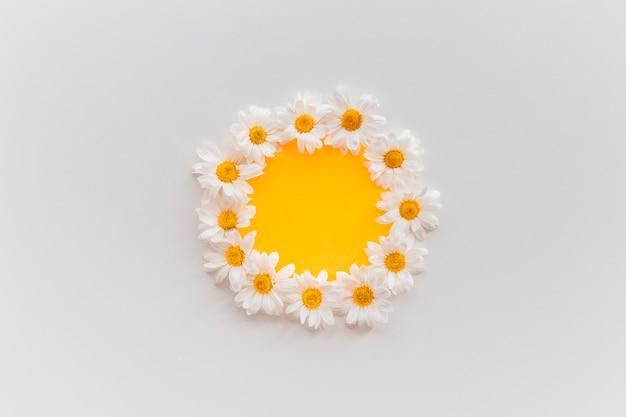 Flores frescas daisy dispostas em forma circular em papel laranja contra um pano de fundo branco Foto gratuita