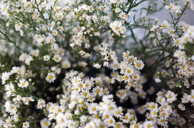 Flores, gypsophila, linda, por amor, publicidade e espaço de texto Foto Premium