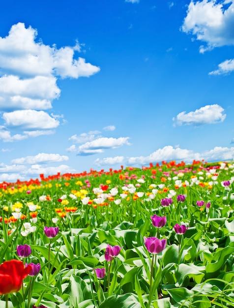 Flores lindas da primavera Foto Premium