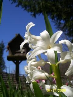 Flores lindas Foto gratuita