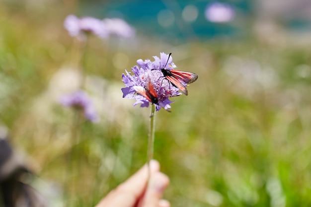 Flores raras da montanha e plantas que crescem na encosta das montanhas do cáucaso Foto Premium