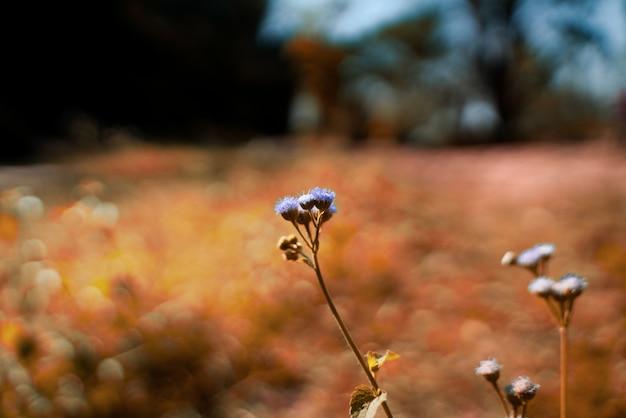 Flores roxas no verão Foto Premium