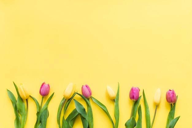 Flores tulipa colorida decorativa em um fundo Foto gratuita