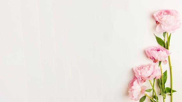 Flores Foto gratuita