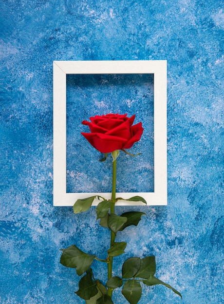 Florescência rosa vermelha na frente de uma moldura de madeira branca Foto Premium