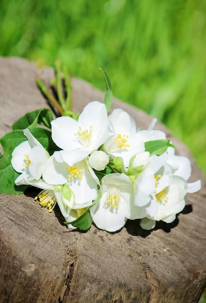 Florescendo flores de jasmim. foco seletivo. flores da natureza. Foto Premium