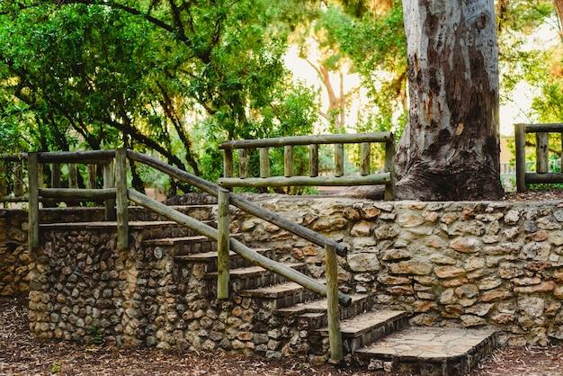 Floresta ao pôr do sol com cores quentes de verão Foto Premium
