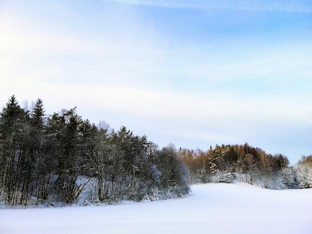 Floresta cercada por árvores cobertas de neve sob o sol em larvik, na noruega Foto gratuita