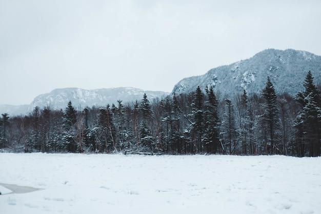 Floresta coberta de neve Foto gratuita